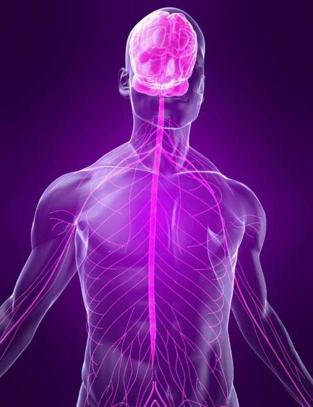 Neuroplasticiteit, NLP en de kracht van onze gedachten