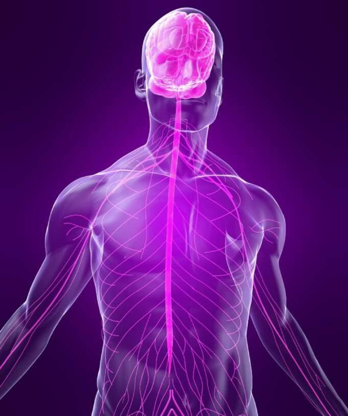 Neuroplasticiteit en het zenuwstelsel