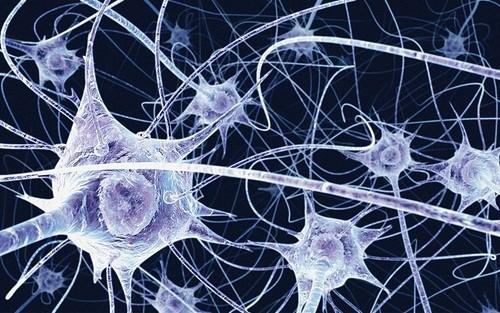 brein neurologie21 Neuroplasticiteit, NLP en de kracht van onze gedachten