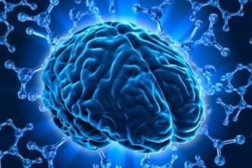 hersenen neuroplasticiteit Welkom op ADD kenmerken