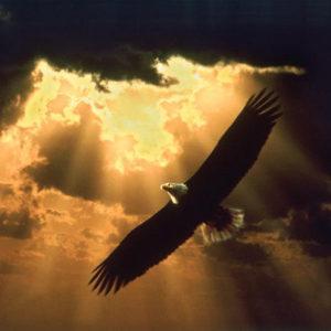zwevende adelaar