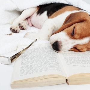 Boek lezen met ADD, het was een drama voor mij!