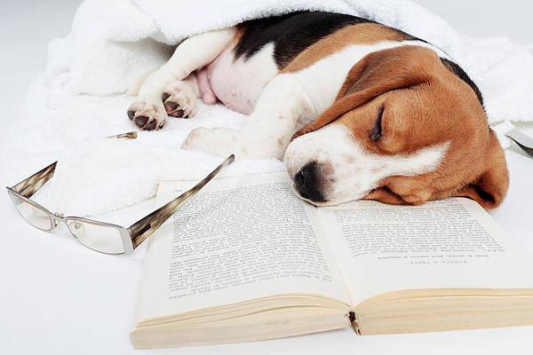 ADD / ADHS und Bücher lesen ... Drama oder Vergnügen?