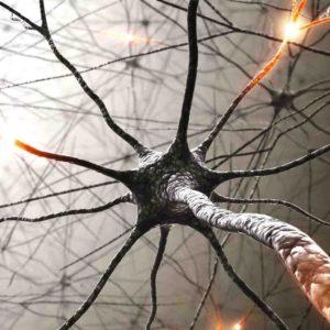 Breinneurologie en neurofeedback